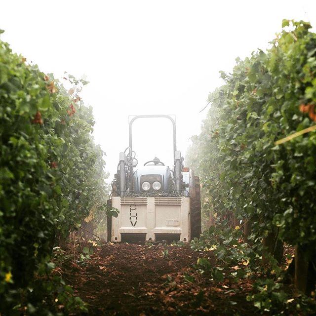 tractor-vineyard