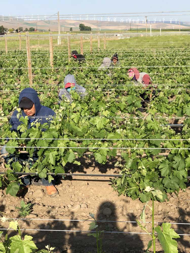 Workers Vineyards